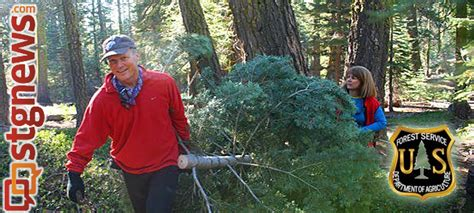 utah christmas tree permits take a family chopping trip in dixie national forest st george news