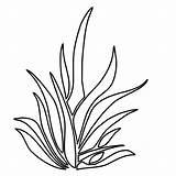 Grass Coloring Seaweed Pages Drawing Plants Outline Clipart Simple Template Colouring Tall Thrives Growing Lemon Clip Sheet Sketch Tree Flower sketch template