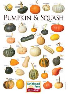 Types Of Pumpkins Australia by Myscaryblog Com 05 01 2013 06 01 2013