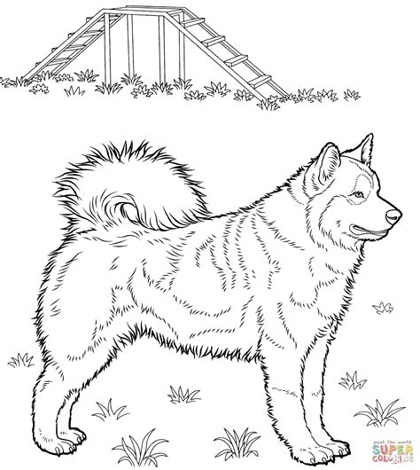 husky coloring page  printable coloring pages