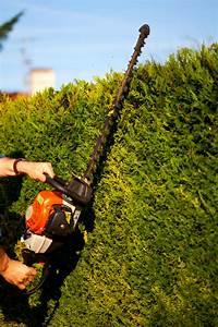 Taille Des Haies : semis des radis ~ Dallasstarsshop.com Idées de Décoration