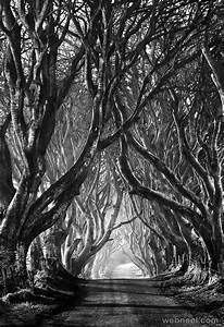 tree black and white photography by stephen emerson 2