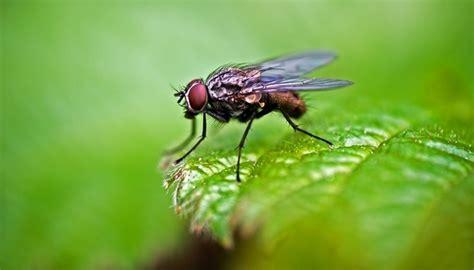 How To Get Rid Of Flies In My Yard
