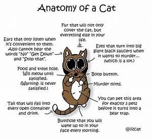 Anatomy Of Cat Ear