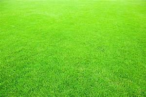 Green-lawn-bkgd