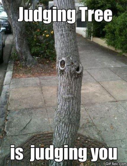 Judging Meme - snarking up the wrong tree babycenter