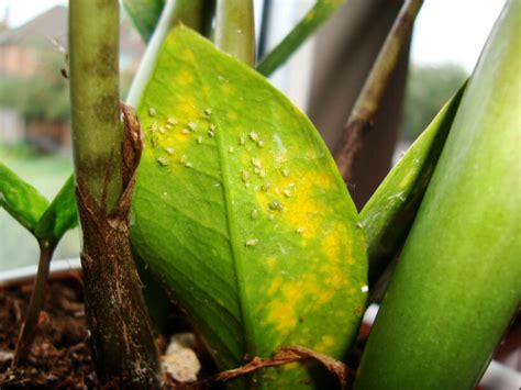 Images Of House Plant Diseases