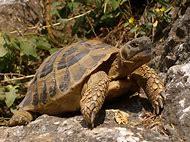 Turtle Spirit Animal