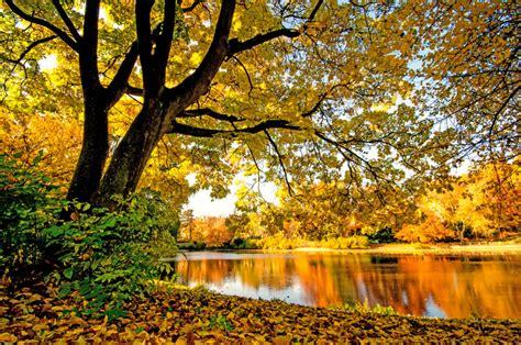Zelta rudens pilnā sparā! Četras skaistas vietas, kur to ...