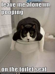 leave me alone im pooping on the toilet seat lolcats