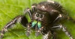 Faire Fuir Les Araignées : m me sans oreilles les araign es peuvent vous entendre arriver plusieurs m tres ~ Melissatoandfro.com Idées de Décoration