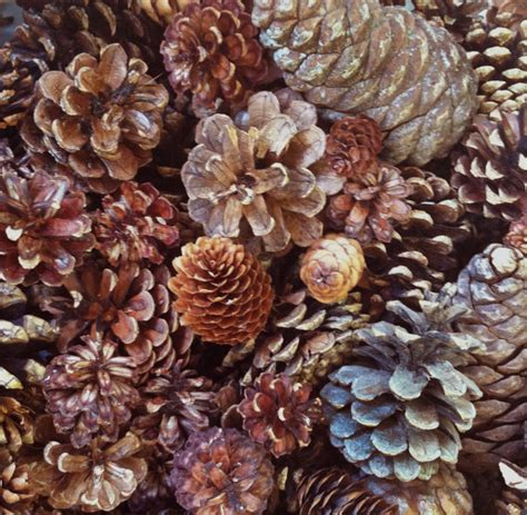 tiny pine cones for crafts 100 assorted pine cones spruce cones small by naturescavenger