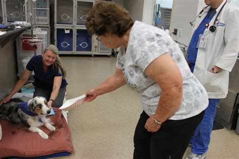 Uf Veterinarians Save Dog That Ingested Horse Medicine