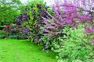 Quels Arbustes Pour Une Haie : comment choisir les arbustes pour votre haie ~ Premium-room.com Idées de Décoration