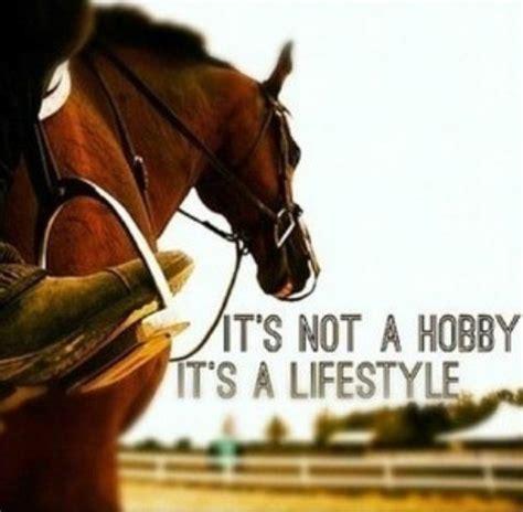 horse quotes horse anecdotes pinterest image