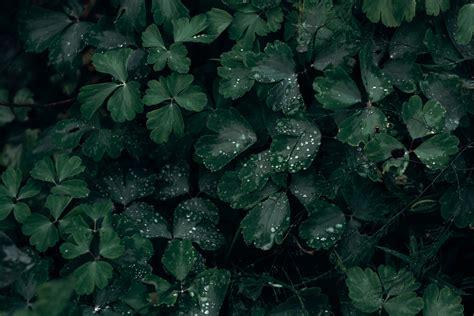 gambar indah warna hijau tua kegelapan embun