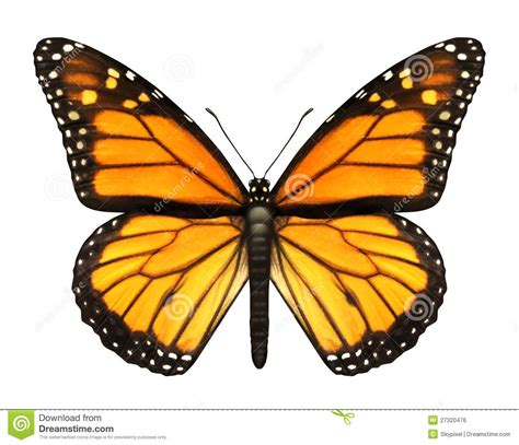clipart farfalla monarch butterfly royalty free stock image image 27320476