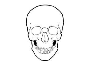 pin  paige     head skull hands  head