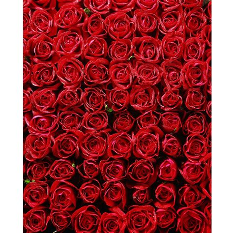 baby bed bed of roses printed backdrop backdrop express