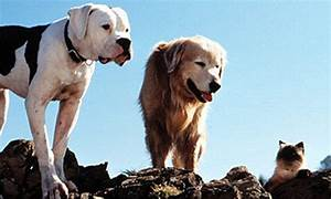 Did YOU buy your dog after watching 101 Dalmatians ...