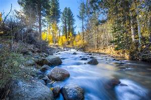 Free, Images, Landscape, Tree, Nature, Forest, Rock
