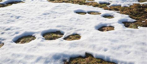Rasen Düngen Regen by Rasen Kalken Bei Regen Schnee Bestes Rasenpflege Wetter