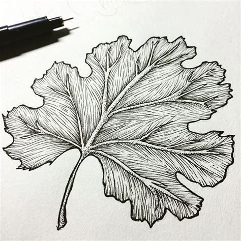 images  leaf skeleton  pinterest leaf