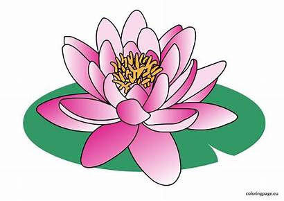 Water Clipart Flower Lily Lilies Lilys Cartoon