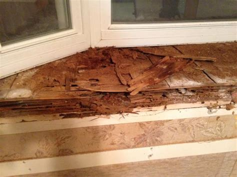 Replace Window Sill Outside by Bay Window Bottom Sill Rotted Pic Included