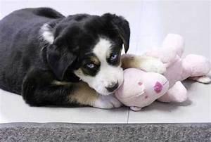 Husky Beagle Mix   Cute Animals   Pinterest   Cas, Doggies ...