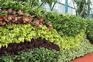Amazing, Green, Wall, Vertical, Garden, Design, For, New, Ekkamai, Campus, St, Andrews, International