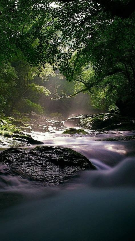 flowing forest river iphone  wallpaper hd