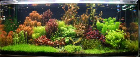 Planted Aquascape by 125 Gallon Freshwater Planted Tank Rainforest Concepts