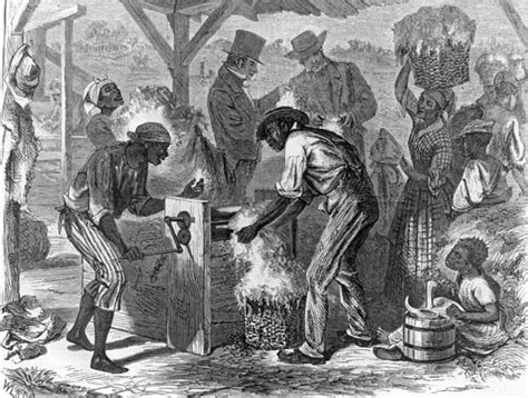 harpers weekly african slaves working   cotton