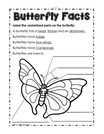 parts of a butterfly butterfly lesson pinterest