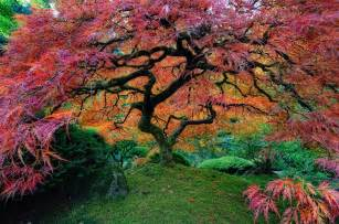 16 of the most stunning trees in the world stylish