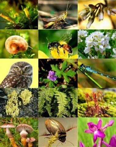 Botanischer Garten Bonn Tag Der Artenvielfalt by Be Projekt Naturschutz Artenvielfalt