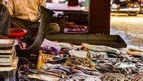 indian fish market stock images   royalty