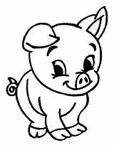 Pig Coloring Adorable Funny sketch template