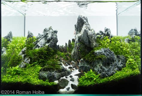 Aquascaping Layouts by 2014 Aga Aquascaping Contest 489