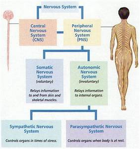 Level 2 Anatomy And Physiology Quiz Mock Paper  Part 4 Of 4