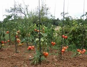 Comment Tuteurer Les Tomates : tuteur de tomate fibre de verre flexible en couleur ~ Melissatoandfro.com Idées de Décoration