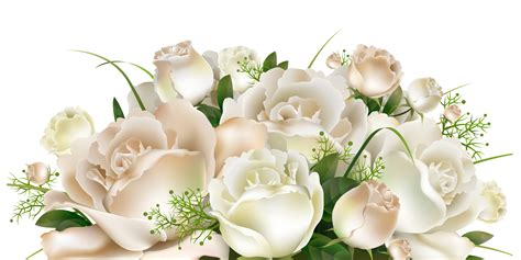 White Roses Decoration Png Clipart Picture