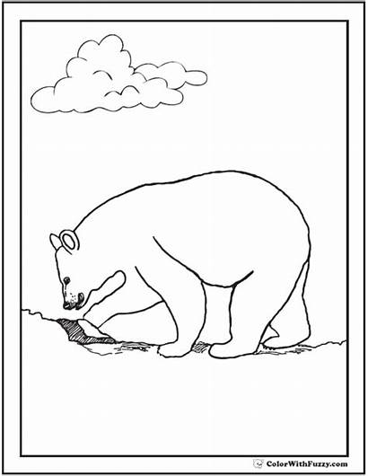 Bear Coloring Digging Polar Bears Grizzlies Teddy