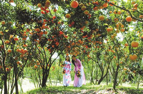 fruits garden pictures the places you should not miss when travelling to can tho