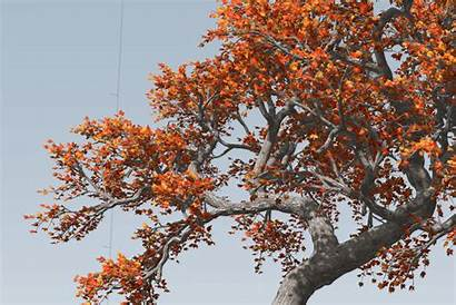 Wind Maple Games Speedtree Leaves Trees Unity