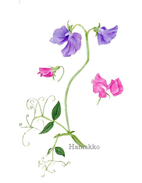 April Birth Flower Sweet Pea