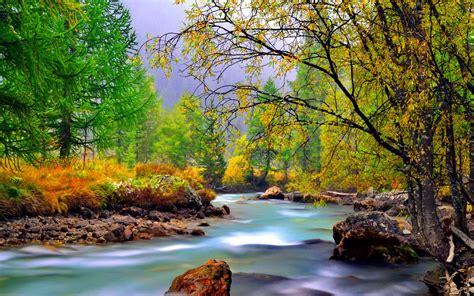 mountain river  rocks rocks yellowed grass evergreen