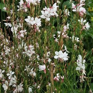 Weiß Blühende Stauden : dauerbl her unter den stauden mein sch ner garten ~ Watch28wear.com Haus und Dekorationen