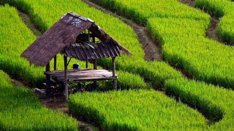 indonesia rice villages wallpaper